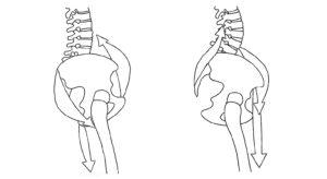 yoga anatomie de onderrug