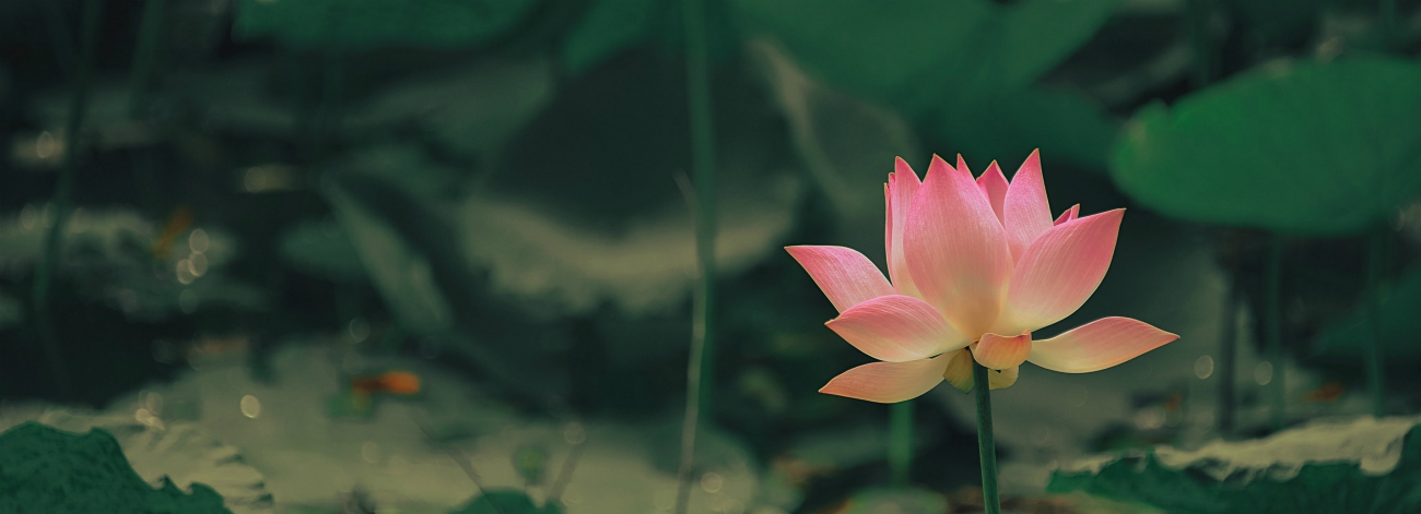 yoga blog betekenis aum om