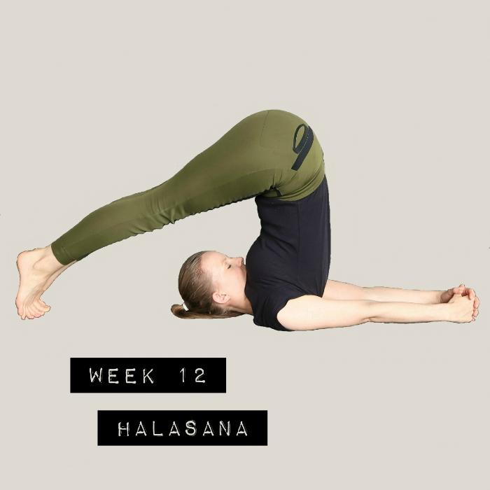 yoga online beginners