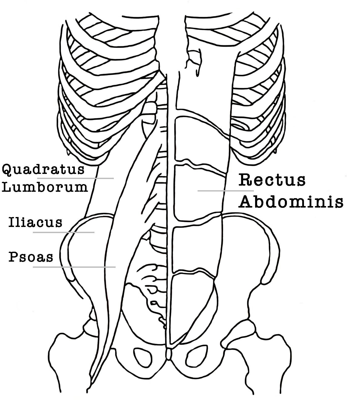yoga anatomie psoas
